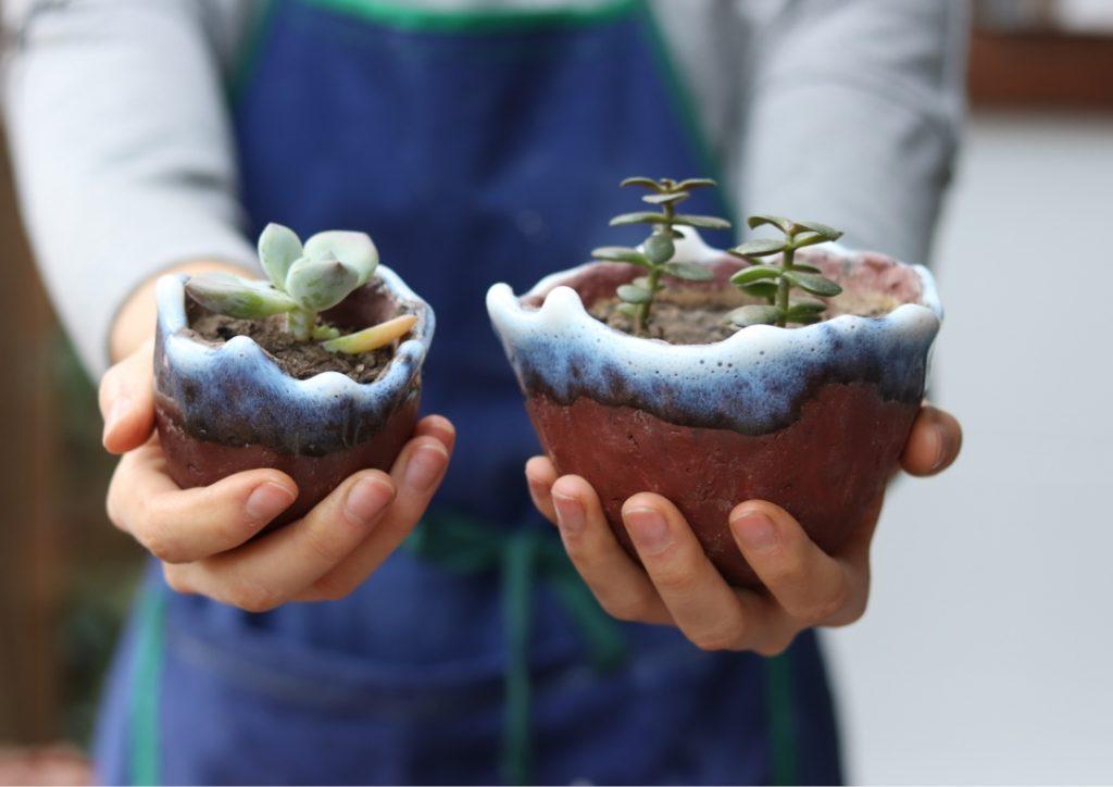 pot de fleur en grès rouge et succulentes tenus dans mains